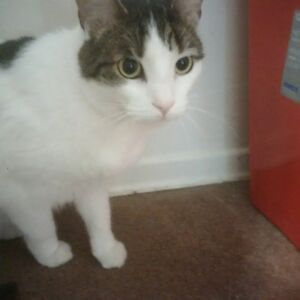 2 yr old cat for rehoming