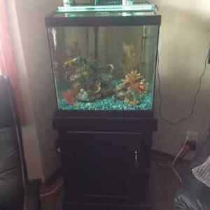 Complete 30 gal Tank with Fish