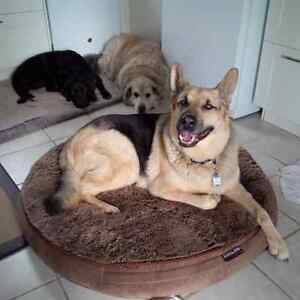 PET SITTING $25 PER DAY, DOG DAY CARE $15 to $20 PER DAY London Ontario image 2