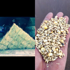 Almost Sold Out! Pure Alfalfa and  Bait Grain For Sale