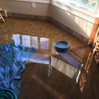 WATER DAMAGE, FLOODS . 24/7 EMERGENCY SERVICES, MOULD, MOLD