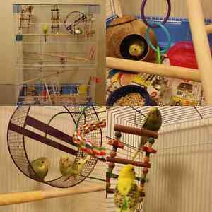 Breeding budgies and Family