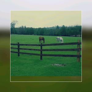 Horse boarding -Maple Hill Farm in Eganville