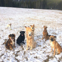 SPEND YOUR DAYS WITH DOGS IN THE MOUNTAINS!