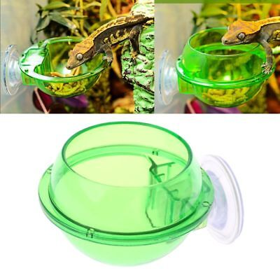 Reptile Anti-escape Food Bowl Cup Turtle Lizard Worm Live Food Container