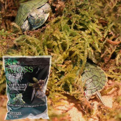 100g Natural Terrarium Moss Reptile Turtle Moss Substrate Habitat Decoration