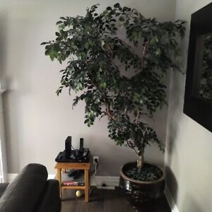 8 ft Artificial tree with lights and clay pot