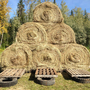 Hay for sale Prince George British Columbia image 3