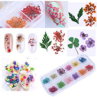 Trocken Blume 3D Nail Art Dekoration Maniküre Blatt Blumen Pflanzen Nagel Dekors ()