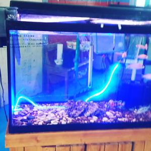 Aquarium service d entretien