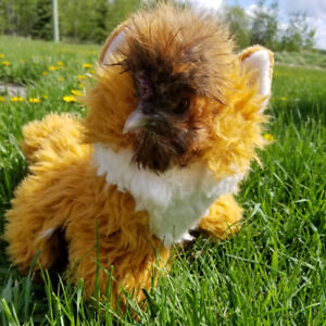 ISO Silkie Chicken to Spoil