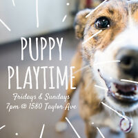 PUPPY PLAYTIME ★ FRIDAYS & SUNDAYS ★