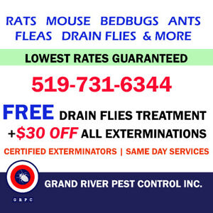 Affordable + Reliable Pest Control Services in Brantford