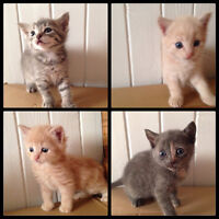 Kittens looking for loving, responsible homes