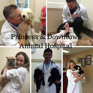 Come FEEL the Difference-Princess & Downtown Animal Hospitals