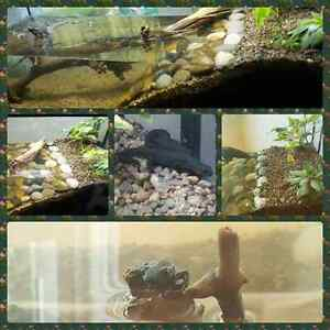 Newts and tank for sale