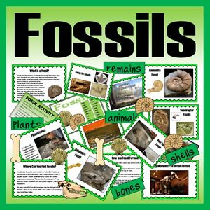 Cd fossils teaching resources ks1 ks2 science history for Soil facts ks2