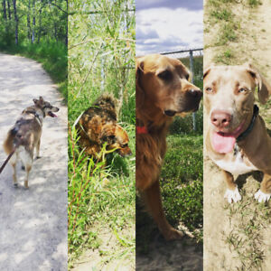 Dog Walking Spots Available!