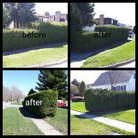 Lawn & Hedge Services