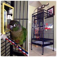 Green Cheek Conure with Large Prevue Hendryx Cage