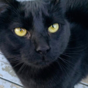 OUR CAT 'IGGY' IS LOST!