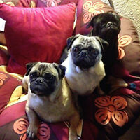 St Vital & area Pugmama Res Cleaning Srvc WEEKLY space available