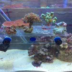 Saltwater fish and coral for sale