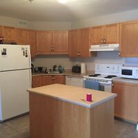 Female roommate wanted Dieppe