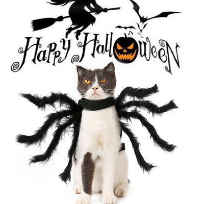Funny Pet Cat Halloween Costumes (Halloween Pet Cat Dog Spider Costume Cool Cosplay Clothes For Puppy Funny)