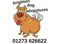 Brighton Dog Adventures - January Sale: walks from £4 per day