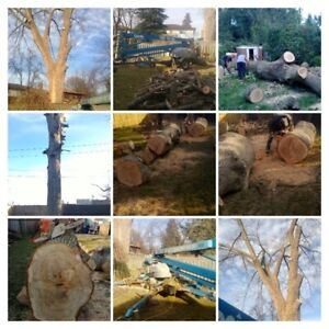 Tree Trimming Tree Removal by Two Guys Tree Service 289-600-1374