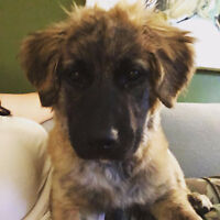 Looking for puppy/dog walker