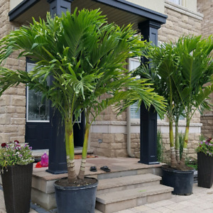 Tropical plant winter storage