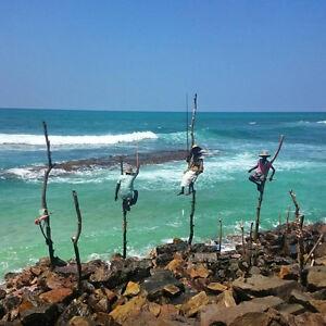Volunteer Trip to Sri Lanka Kingston Kingston Area image 7