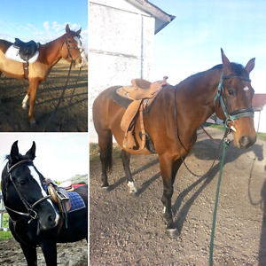 ISO: Well Started Project Horse