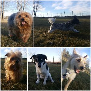 Balanced K9 Living-In home Dog Boarding- March Break Plans?!