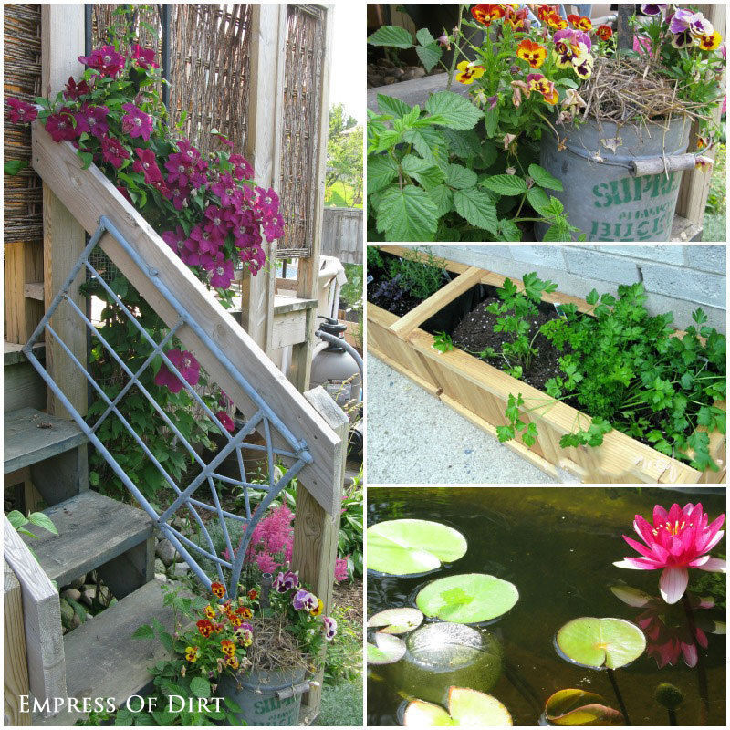 Take lots of garden photos to track your progress