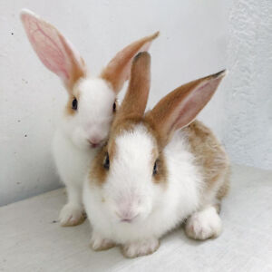 Cutest pet rabbits for adoption