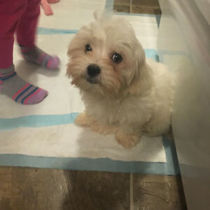 Kjiji Ontario Dogs For Rehome And Sale