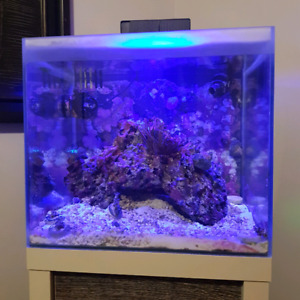 Fluval m40 will trade for large aquarium 500 obo