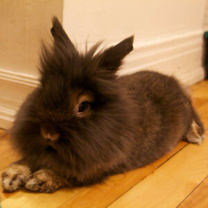 In search of house/bunny sitter for holidays!