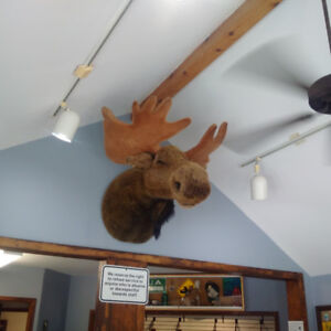 Wanted - looking for the cute moose head - see attached picture.