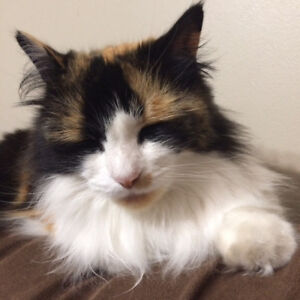 LOST cat in North End Halifax