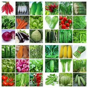 HEIRLOOM-VEGETABLE-GARDEN-SEEDS-NON-GMO-HYBRID-ORGANIC-SURVIVAL-PLANT-BANK-LOT