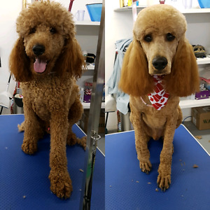 ** Experienced Dog Groomer Looking to Rent a table **