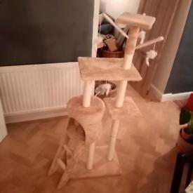 FREE Cat climbing tree/ Scratching post