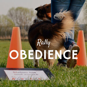 THE PAWSH DOG TRAINING ACADEMY - RALLY OBEDIENCE CLASSES