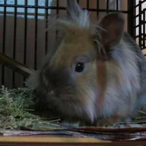 Rabbit Boarding in Loving Home Available.