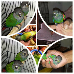 Exotic Parrot for Rehoming