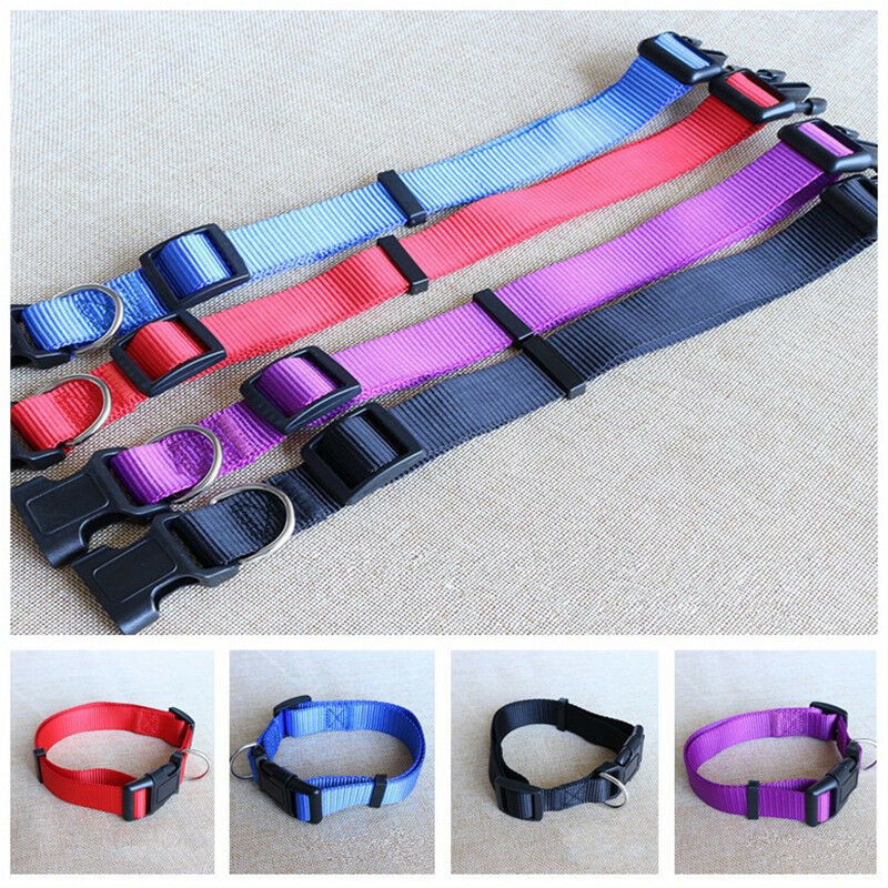Pet Dog Nylon Collars Charming Solid Adjustable Collar 4 Col